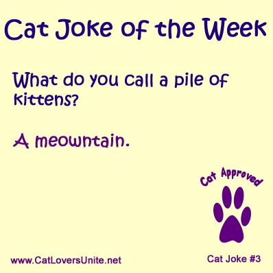 Cat Joke #3
