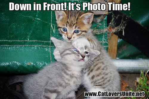 Caption This Cat Photo #1
