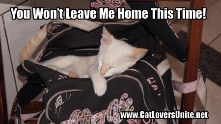 Cute Cat Sleeping In Bag