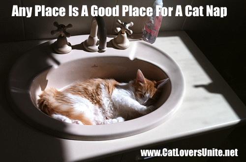 Cat Sleeping in the Sink