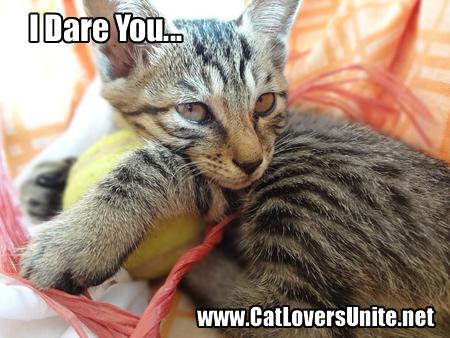 Caption this cat photo
