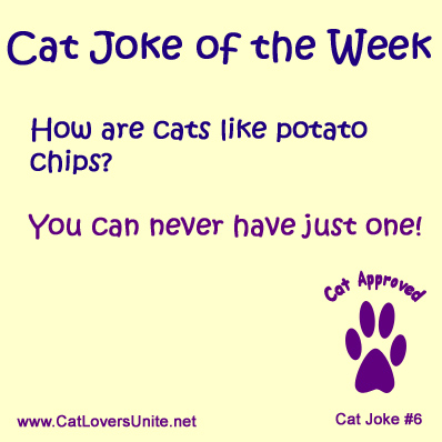 Cat Joke of the Week 6