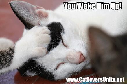 Sleeping Cat Being Poked