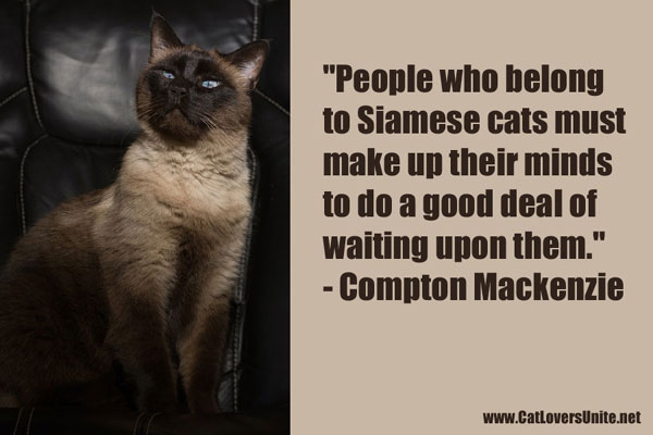 quote about siamese cats