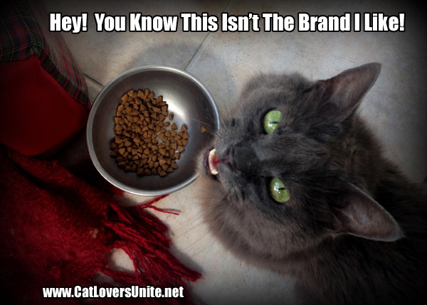 FunnyCatPic DryFood wrong brand of cat food catloversunite net,Food Cat Meme