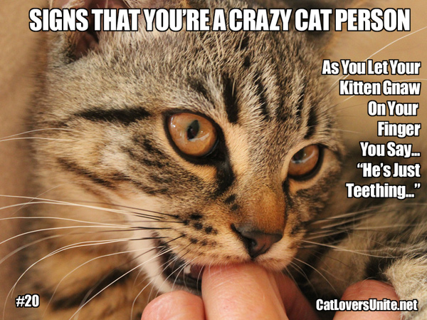 A meme about crazy cat people. For more: CatLoversUnite.net