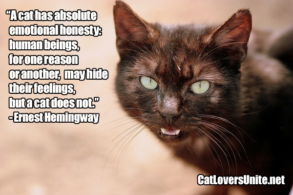 Hemingway cat quote on emotions. For more visit: CatLoversUnited.net