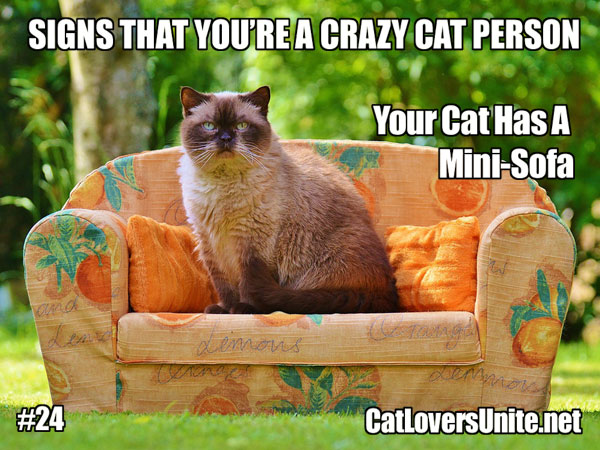 Crazy Cat Person Meme #24 - For more visit: http://CatLoversUnite.net