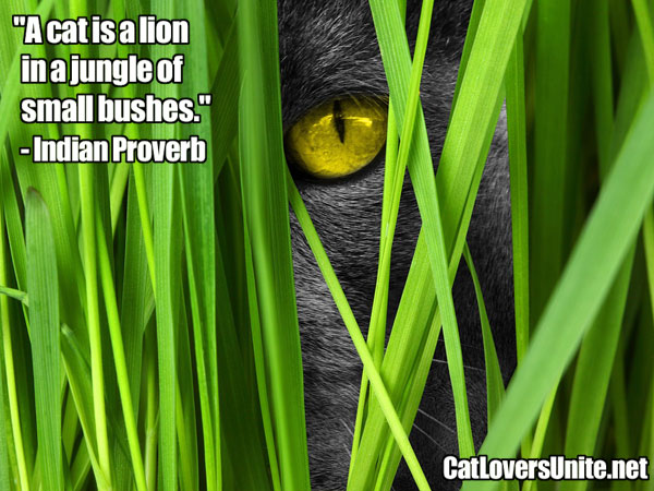 Indian Proverb on Cats