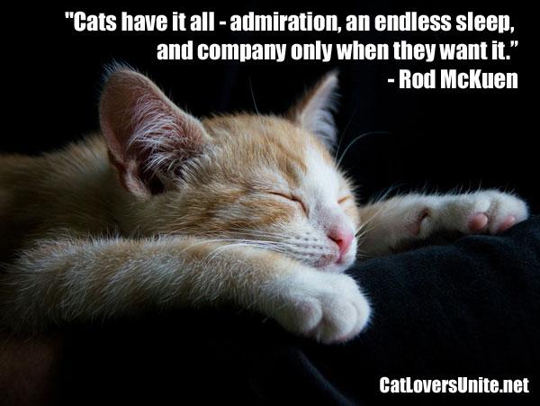 Cat quote by Rod McKuen
