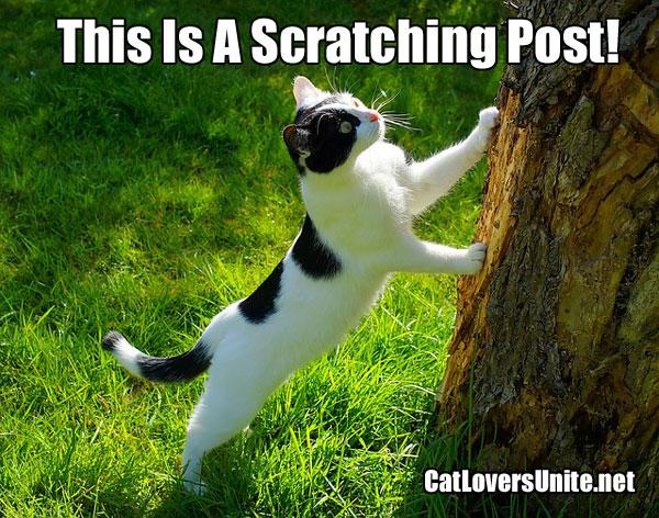 A cat scratching a tree