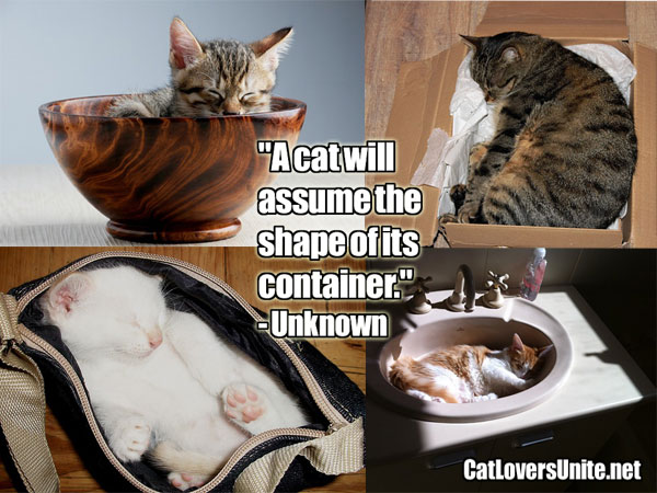 Cats fit the container quote. For more cat quotes: CatLoversUnite.net
