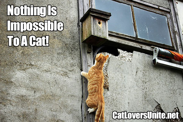 Photo of a cat climbing a building