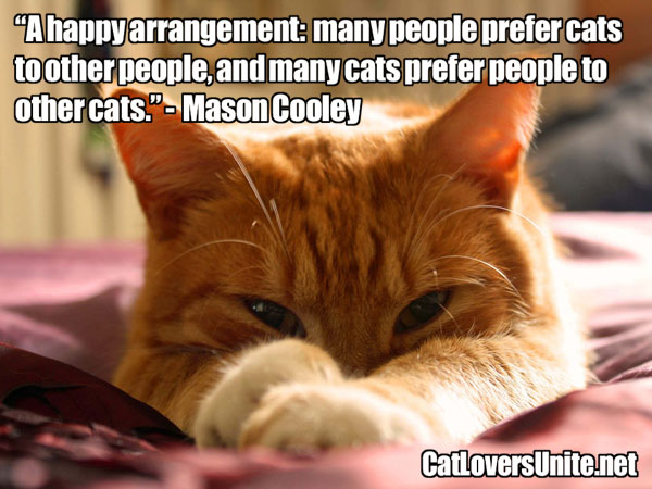Cat Quote by Mason Cooley