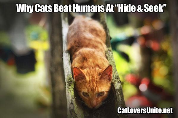 Meme of tabby cat hiding