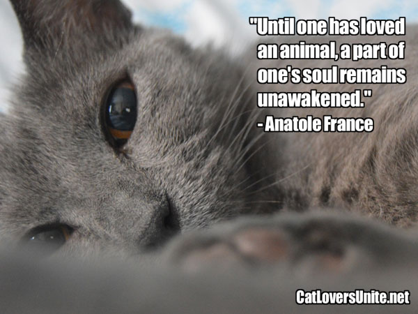 Anatole France Pet Quote. More at: CatLoversUnite.net