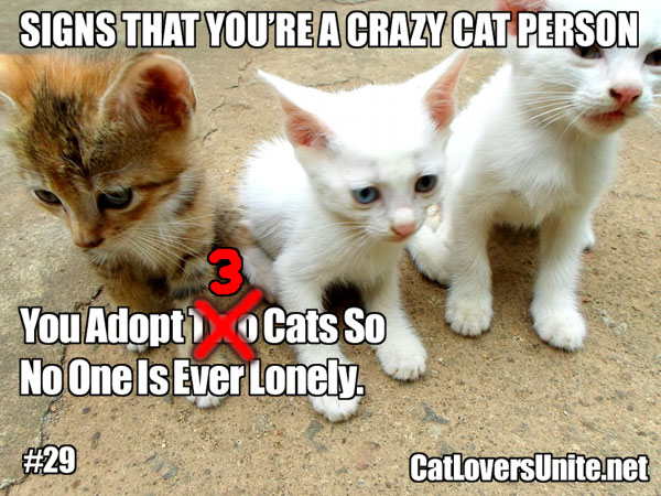 Crazy Cat Person #29. More at: http://catloversunite.net