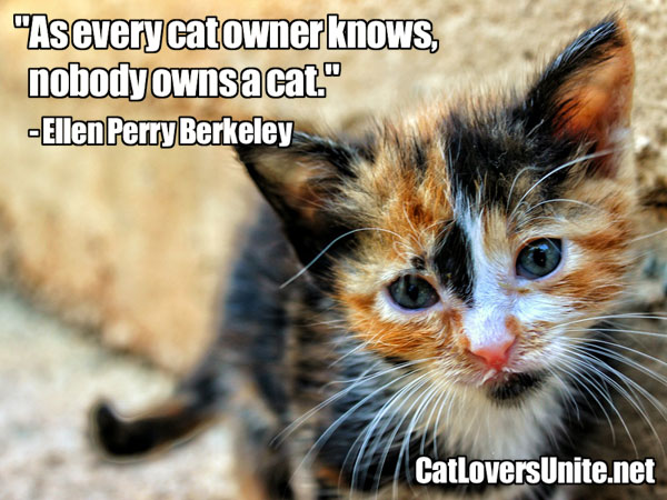 Illustrated Cat Quote - Nobody owns a cat