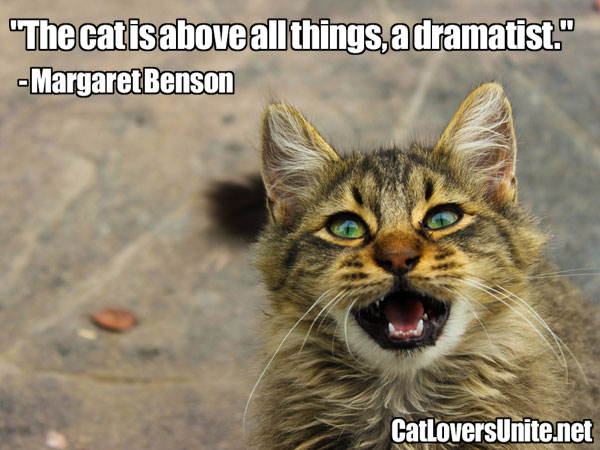 A graphic cat quote by Margaret Benson