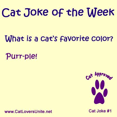 Cat Joke #1