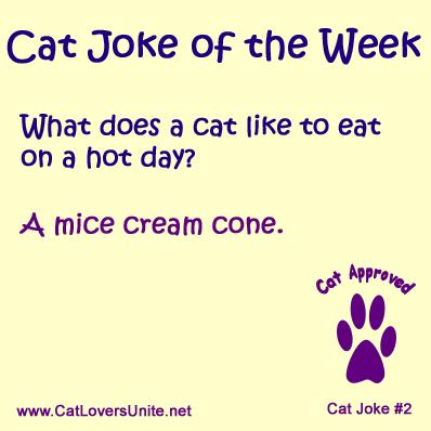 Cat Joke #2