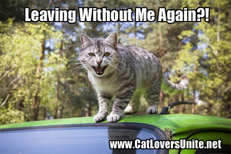 Funny cat photo - cat on a car roof