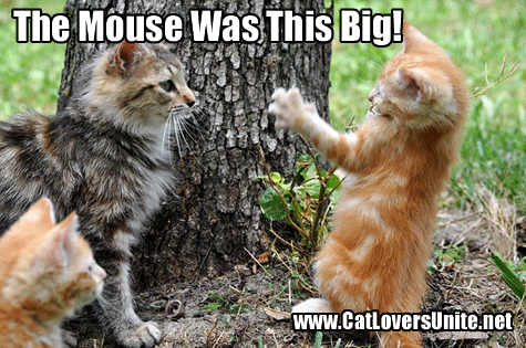 Tall Tale? Caption this funny cat photo