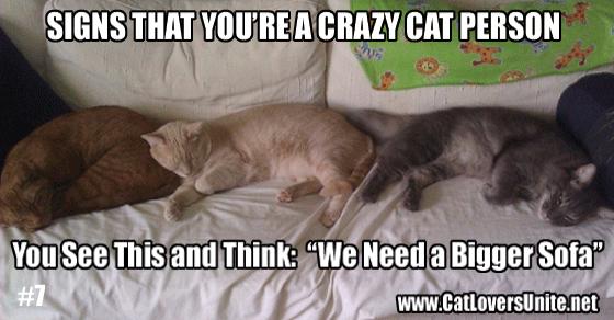 Crazy Cat Person #7
