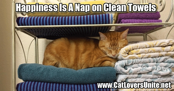 Cat sleeping on stack of towels