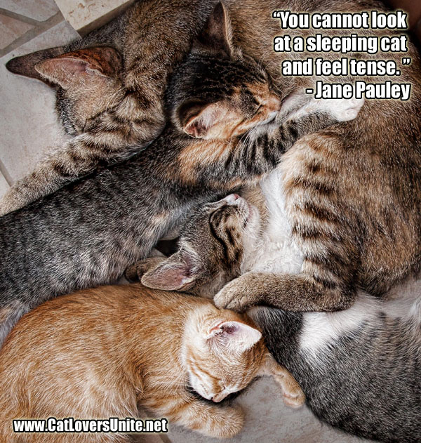 photo of sleeping cats with quote