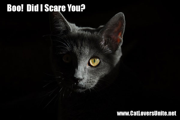 funny photo of black cat saying boo