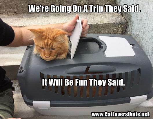 Cat in Carry Box Meme