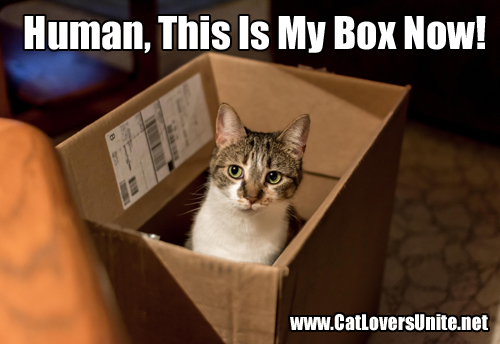 Photo of a cat in a box