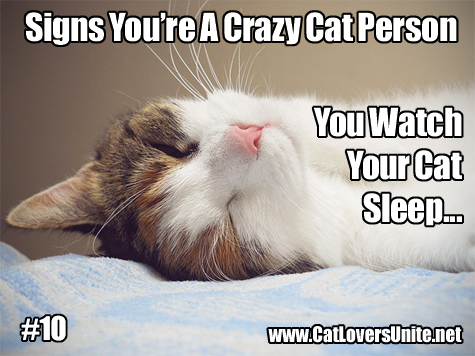 Cat meme in the Crazy Cat Person series
