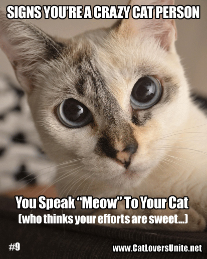 Meme #9 in the You May Be a Crazy Cat Person series