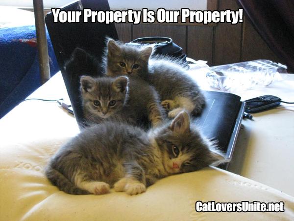 Three kittens on a laptop