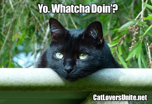 Photo Meme of black cat resting outside
