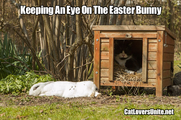Is this cat protecting the Easter bunny?