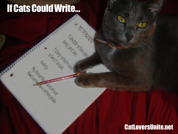 PIcutre of cat with written demands