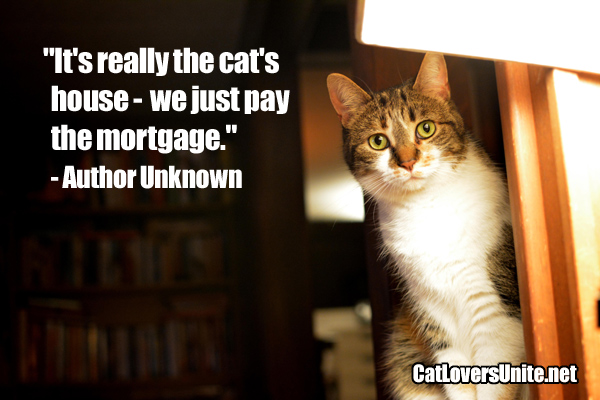 Cat quote about who really owns the house