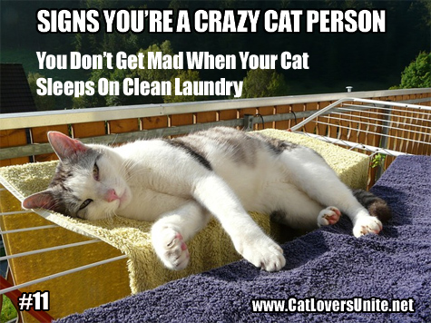 Cat meme photo - Signs You're a Crazy Cat Person #11
