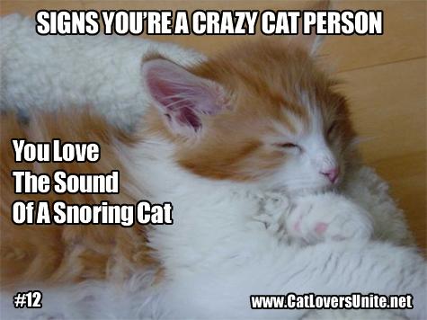 Cat meme for crazy cat people