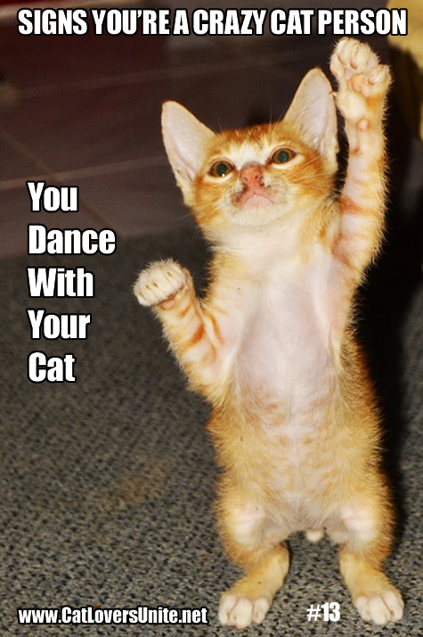 Crazy Cat Person meme #13