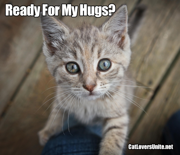 Cute picture of kitten ready for hugs