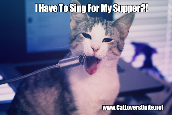 Cat singing into microphone