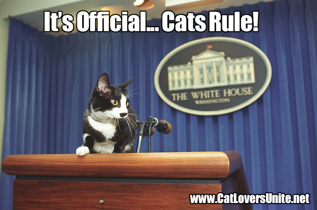 Photo of cat at White House microphone