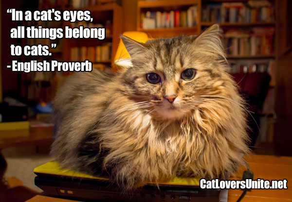 All Things Belong to Cats Quote