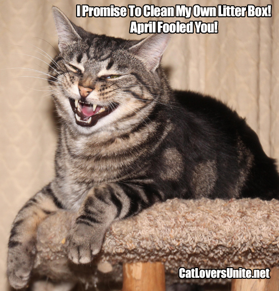 Cat photo meme for April Fools Day.