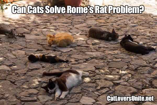 Are cats the solution to Rome's rat problem?