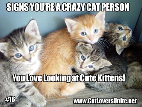 Crazy Cat Person Meme #16.